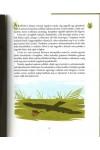 Erdőlakók - Tudáspróba melléklettel és matricákkal