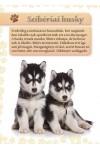 Kutyakölykök