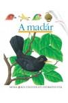 A madár (Kis felfedező zsebkönyvek 25.)