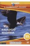 A természet csodái 11.: Ragadozó madarak (DVD)