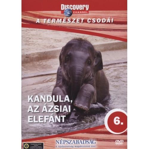 A természet csodái 6. Kandula, az ázsiai elefánt (DVD)