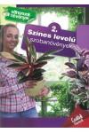 Otthonunk növényei 2. – Színes levelű szobanövények (Családi füz