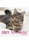 Macskák - Képes falinaptár (nagy) 2021